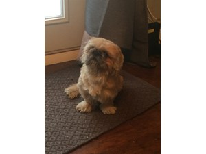<a href='/pet-recovery/FoundPetPoster.aspx?sighting=19492' style='color:white; text-decoration:none;'>Shih Tzu type (dog)<br/>Elmhurst, IL</a>