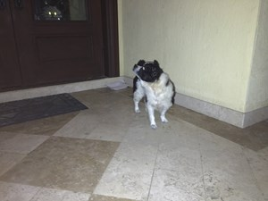 <a href='/pet-recovery/FoundPetPoster.aspx?sighting=19502' style='color:white; text-decoration:none;'>Mixed (Dog)<br/>Miami, FL</a>