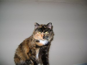 <a href='/pet-recovery/LostPetPosterOnline.aspx?lpid=38471' style='color:white; text-decoration:none;'>Sassy (Calico)<br/>Charlotte, NC</a>