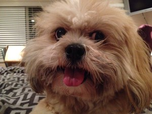 <a href='/pet-recovery/LostPetPosterOnline.aspx?lpid=38482' style='color:white; text-decoration:none;'>Wrigley (Lhasa Apso)<br/>Pasadena, CA</a>