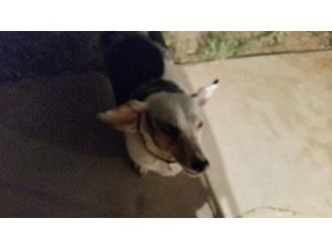 <a href='/pet-recovery/FoundPetPoster.aspx?sighting=19513' style='color:white; text-decoration:none;'>mix (dog)<br/>mesa, AZ</a>
