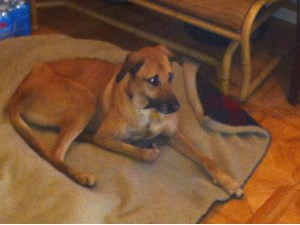 <a href='/pet-recovery/FoundPetPoster.aspx?sighting=19515' style='color:white; text-decoration:none;'>hound (dog)<br/>nashville, TN</a>