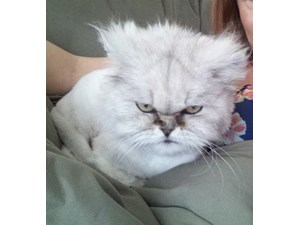 <a href='/pet-recovery/LostPetPosterOnline.aspx?lpid=38498' style='color:white; text-decoration:none;'>MooShu (Persian)<br/>Antioch, CA</a>