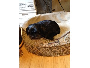 <a href='/pet-recovery/LostPetPosterOnline.aspx?lpid=38500' style='color:white; text-decoration:none;'>Lovee/Cookie (Shih Tzu)<br/>Pepperell, MA</a>