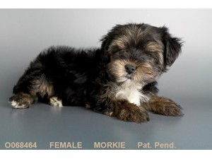 <a href='/pet-recovery/LostPetPosterOnline.aspx?lpid=39156' style='color:white; text-decoration:none;'>Matilda (Morkie)<br/>poughkeepsie, NY</a>