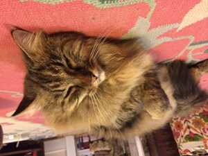 <a href='/pet-recovery/FoundPetPoster.aspx?sighting=19865' style='color:white; text-decoration:none;'>? (CAT)<br/>Decatur, GA</a>