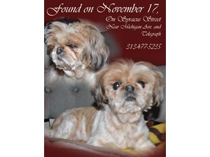 <a href='/pet-recovery/FoundPetPoster.aspx?sighting=19866' style='color:white; text-decoration:none;'>Shih Tzu (Dog)<br/>Dearborn, MI</a>