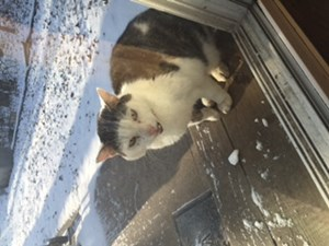 <a href='/pet-recovery/FoundPetPoster.aspx?sighting=19878' style='color:white; text-decoration:none;'>short hair (Cat)<br/>Muskego, WI</a>