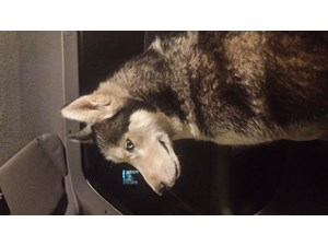 <a href='/pet-recovery/FoundPetPoster.aspx?sighting=19894' style='color:white; text-decoration:none;'>husky (dog)<br/>Dalton gardens, ID</a>