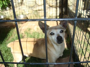 <a href='/pet-recovery/FoundPetPoster.aspx?sighting=19904' style='color:white; text-decoration:none;'>Chihuahua (dog)<br/>Ontario, CA</a>