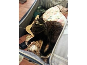 <a href='/pet-recovery/LostPetPosterOnline.aspx?lpid=39095' style='color:white; text-decoration:none;'>Kitty Pride (Maine Coon)<br/>Mesa, AZ</a>
