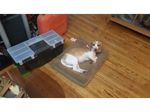 <a href='/pet-recovery/LostPetPosterOnline.aspx?lpid=39098' style='color:white; text-decoration:none;'>blanca (Beagle)<br/>Waterbury, CT</a>