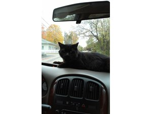 <a href='/pet-recovery/LostPetPosterOnline.aspx?lpid=39113' style='color:white; text-decoration:none;'>Hannah (Domestic Short Hair)<br/>Methuen, MA</a>