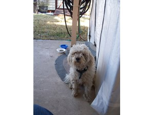 <a href='/pet-recovery/FoundPetPoster.aspx?sighting=19920' style='color:white; text-decoration:none;'>mixed (dog)<br/>grand prairie, TX</a>