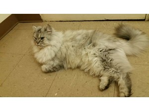 <a href='/pet-recovery/FoundPetPoster.aspx?sighting=19926' style='color:white; text-decoration:none;'> (cat)<br/>Penndel, PA</a>