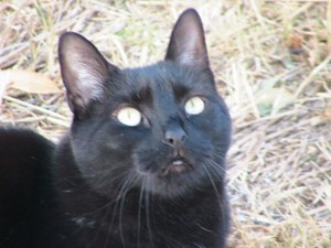 <a href='/pet-recovery/LostPetPosterOnline.aspx?lpid=39135' style='color:white; text-decoration:none;'>Mocha (American Shorthair)<br/>Albuquerque, NM</a>
