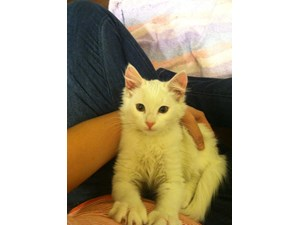 <a href='/pet-recovery/FoundPetPoster.aspx?sighting=19932' style='color:white; text-decoration:none;'> (Kitten)<br/>Charlotte, NC</a>