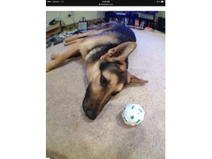 <a href='/pet-recovery/LostPetPosterOnline.aspx?lpid=39121' style='color:white; text-decoration:none;'>Shadow (German Shepherd)<br/>Las Vegas, NV</a>
