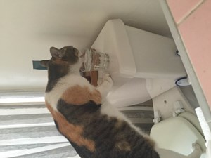 <a href='/pet-recovery/LostPetPosterOnline.aspx?lpid=39142' style='color:white; text-decoration:none;'>Snickers (Calico)<br/>Los Angeles, CA</a>