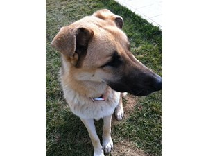 <a href='/pet-recovery/LostPetPosterOnline.aspx?lpid=39144' style='color:white; text-decoration:none;'>Tank (German Shepherd)<br/>San Jose, CA</a>