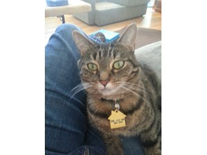 <a href='/pet-recovery/LostPetPosterOnline.aspx?lpid=39152' style='color:white; text-decoration:none;'>Mallory (Domestic Short Hair)<br/>Southfield, MI</a>