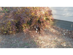 <a href='/pet-recovery/FoundPetPoster.aspx?sighting=19953' style='color:white; text-decoration:none;'>basset hound (dog/puppy)<br/>ccordele, GA</a>