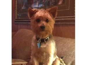 <a href='/pet-recovery/LostPetPosterOnline.aspx?lpid=39173' style='color:white; text-decoration:none;'>Rex (Yorkshire Terrier)<br/>Palestine, TX</a>