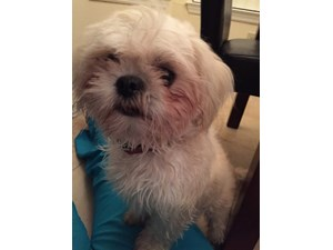 <a href='/pet-recovery/FoundPetPoster.aspx?sighting=19960' style='color:white; text-decoration:none;'> (Dog)<br/>Orlando, FL</a>