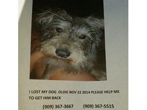<a href='/pet-recovery/LostPetPosterOnline.aspx?lpid=39171' style='color:white; text-decoration:none;'>Oldie (mini schnauzer)<br/>Palmdale, CA</a>