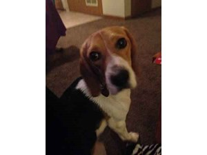 <a href='/pet-recovery/LostPetPosterOnline.aspx?lpid=39172' style='color:white; text-decoration:none;'>baileigh (Beagle)<br/>Columbus, OH</a>