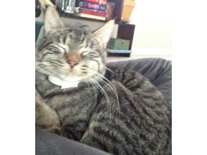 <a href='/pet-recovery/FoundPetPoster.aspx?sighting=19964' style='color:white; text-decoration:none;'>Domestic Short-Haired (Cat)<br/>Selden, NY</a>