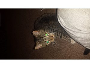 <a href='/pet-recovery/FoundPetPoster.aspx?sighting=19965' style='color:white; text-decoration:none;'> (cat)<br/>toledo, OH</a>