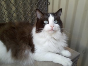 <a href='/pet-recovery/LostPetPosterOnline.aspx?lpid=39182' style='color:white; text-decoration:none;'>Alex (Ragdoll)<br/>Maricopa, AZ</a>