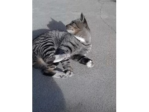 <a href='/pet-recovery/FoundPetPoster.aspx?sighting=19969' style='color:white; text-decoration:none;'> (cat)<br/>los Angeles, CA</a>