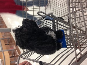 <a href='/pet-recovery/LostPetPosterOnline.aspx?lpid=39191' style='color:white; text-decoration:none;'>Negrita (Lhasa Apso)<br/>Hialeah, FL</a>