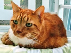 <a href='/pet-recovery/LostPetPosterOnline.aspx?lpid=39195' style='color:white; text-decoration:none;'>Sam or Sammy (Domestic Short Hair)<br/>Charleston, SC</a>