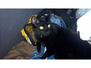 <a href='/pet-recovery/LostPetPosterOnline.aspx?lpid=39205' style='color:white; text-decoration:none;'>Binx (Domestic Short Hair)<br/>Seattle, WA</a>