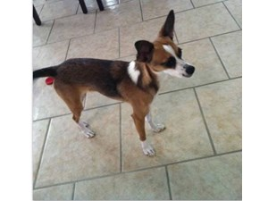 <a href='/pet-recovery/LostPetPosterOnline.aspx?lpid=39208' style='color:white; text-decoration:none;'>Cookie (Chihuahua / Mix Over 30 lbs)<br/>Laredo, TX</a>