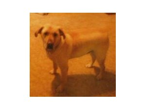 <a href='/pet-recovery/LostPetPosterOnline.aspx?lpid=39209' style='color:white; text-decoration:none;'>Titan (Labrador Retriever)<br/>Celina, OH</a>