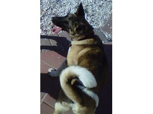 <a href='/pet-recovery/LostPetPosterOnline.aspx?lpid=39210' style='color:white; text-decoration:none;'>Toby (Akita)<br/>Bradenton, FL</a>