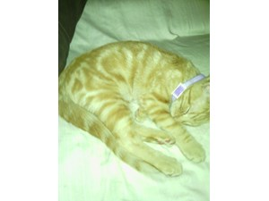 <a href='/pet-recovery/FoundPetPoster.aspx?sighting=19987' style='color:white; text-decoration:none;'>orange with white stripes (kitty cat)<br/>Phoenix, AZ</a>