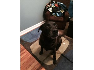 <a href='/pet-recovery/FoundPetPoster.aspx?sighting=19990' style='color:white; text-decoration:none;'>Black Lab Mix (Dog)<br/>Atlanta, GA</a>