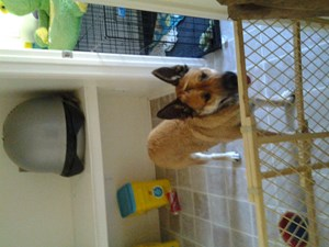 <a href='/pet-recovery/FoundPetPoster.aspx?sighting=19992' style='color:white; text-decoration:none;'>German Shepherd mix (Dog)<br/>San Diego, CA</a>