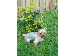 <a href='/pet-recovery/LostPetPosterOnline.aspx?lpid=39238' style='color:white; text-decoration:none;'>Lexi (Silky Terrier)<br/>Cutler bay, FL</a>