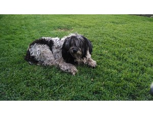 <a href='/pet-recovery/FoundPetPoster.aspx?sighting=20006' style='color:white; text-decoration:none;'>Border Collie/Sheepdog mix? (Dog)<br/>Valley Glen, CA</a>