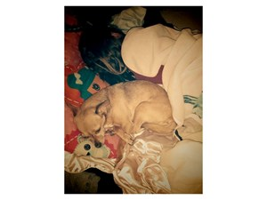 <a href='/pet-recovery/LostPetPosterOnline.aspx?lpid=39254' style='color:white; text-decoration:none;'>Bella (Chihuahua)<br/>Gilbert, AZ</a>