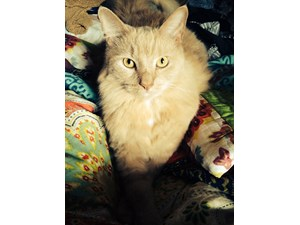<a href='/pet-recovery/LostPetPosterOnline.aspx?lpid=39263' style='color:white; text-decoration:none;'>Bailey (Domestic Long Hair)<br/>Richmond, VA</a>