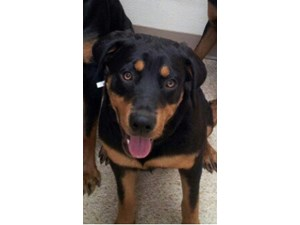 <a href='/pet-recovery/LostPetPosterOnline.aspx?lpid=39274' style='color:white; text-decoration:none;'>FENDI (Rottweiler)<br/>Las Vegas, NV</a>