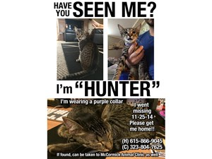 <a href='/pet-recovery/LostPetPosterOnline.aspx?lpid=39278' style='color:white; text-decoration:none;'>Hunter (American Shorthair)<br/>Nashville, TN</a>