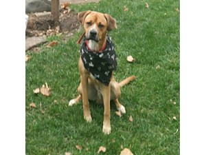 <a href='/pet-recovery/LostPetPosterOnline.aspx?lpid=39279' style='color:white; text-decoration:none;'>Rocky (Boxer)<br/>Easton, PA</a>
